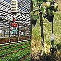 Microsprinkler Landwirtschaft